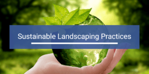 sustainable landscaping practices